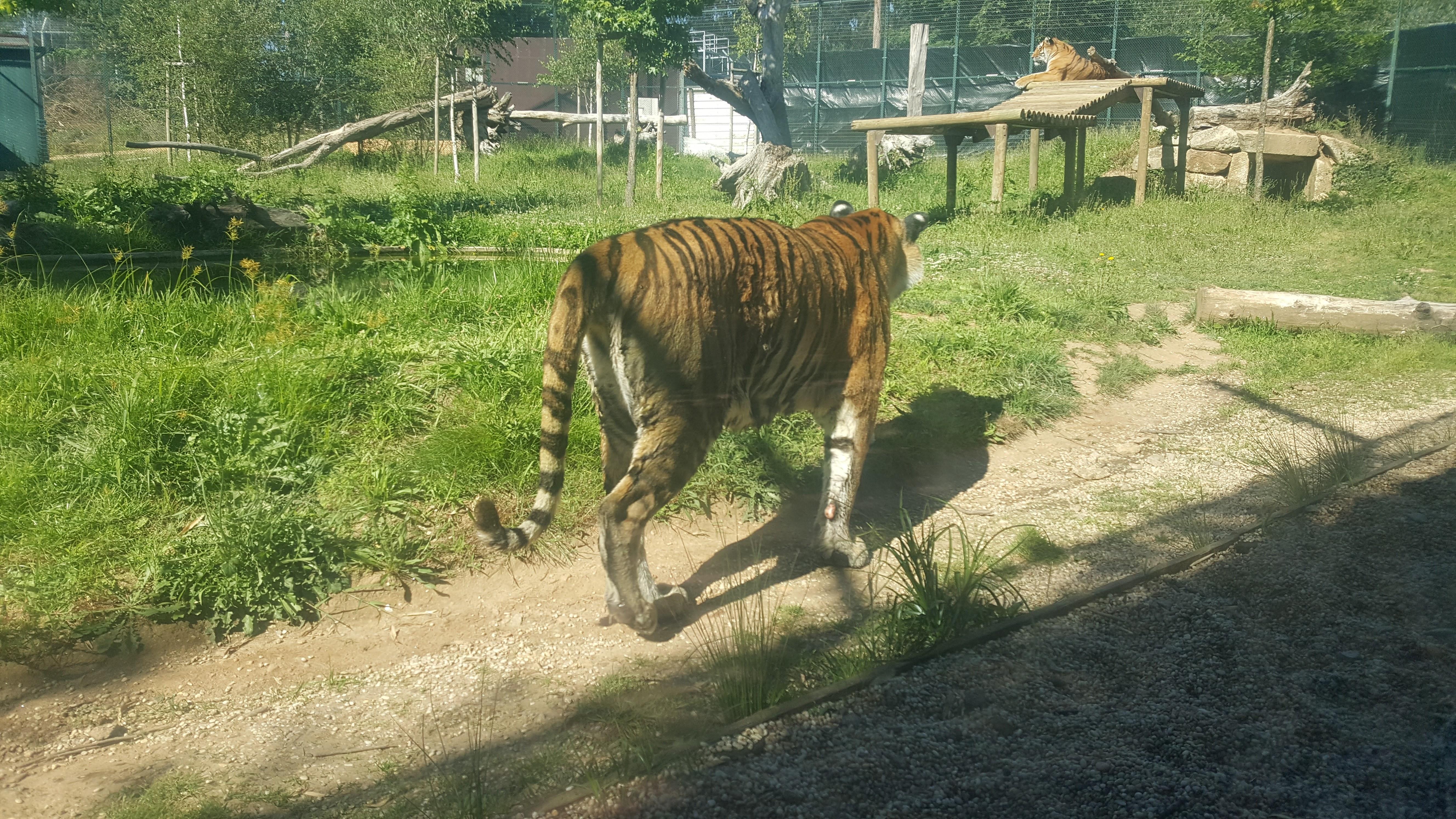 zoo10