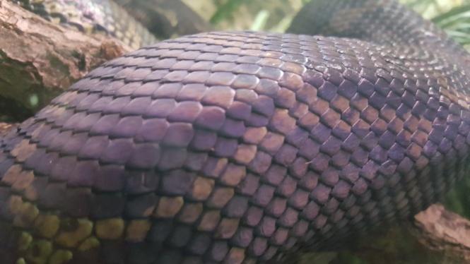 zoo13